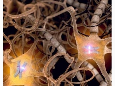 Neural Cells Don't Always Express Mom and Dad's Genes Equally by Charles Choi